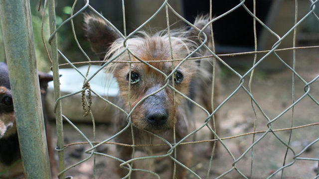 Atlanta Humane Society removes 60 dogs from home