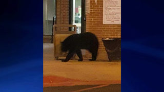 Bear spotted outside Fulton County Jail