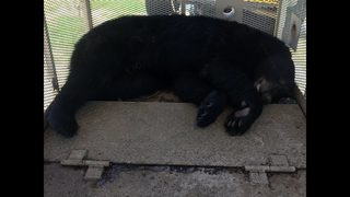 Black bear makes surprise appearance at MARTA station during morning commute
