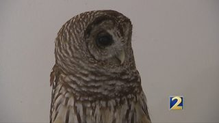 AWARE Wildlife Center rehabs animals and educates public