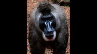 Zoo Atlanta baby returns home to serve as ambassador