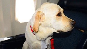 Delta limits emotional support animals, prohibits pit bulls as service or support animals