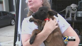 Woman says mix-up at Atlanta airport left her dog in a crate for 2 days