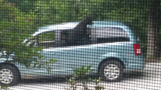 Woman shocked to find black bear inside car, eating her lunch