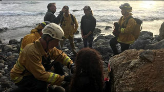 Woman survives a week after crashing 200 feet off cliff in California