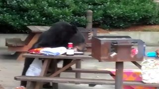 Neighbors upset at plan to trap mother bear, cubs in Georgia community