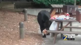 Plan to trap nuisance bears draws fire