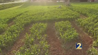 Buford Corn Maze offers Family 2 Family discount