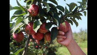 Best family-friendly apple festivals in North Georgia this fall