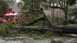 Tree down across a road