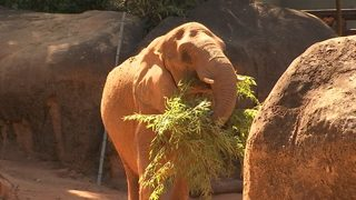 Zoo Atlanta undergoes biggest (and priciest) expansion project