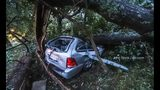 Woman hospitalized after tree falls on SUV during high wind from Michael