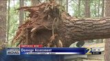 Grandmother and granddaughter say prayer saved them after tree fell on house
