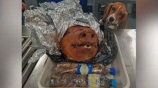Unusual find: K-9 discovers roasted pig in luggage at Atlanta airport