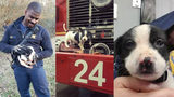 DeKalb firefighter adopts puppy after responding to rescue call