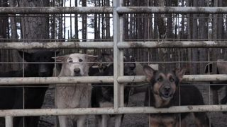 More than 400 German Shepherds rescued over the weekend in need of homes