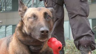 Partner of K-9 that lost eye after being shot in the line of duty: