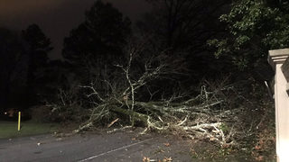 Heavy rain causes downed trees, flooding across Georgia