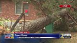 Tree crashes in front of man's house after storms move through Clayton County