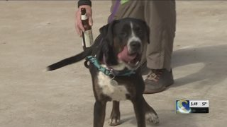 New bill would protect people who break into hot cars to save pets