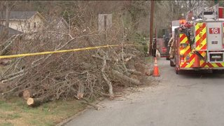 TREE WORKER DEATH DEKALB: Tree trimmer dies after accident