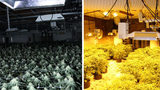 Police: $35M worth of pot, other illegal drugs found in 'elaborate' grow houses