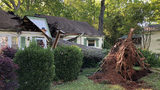 Tree slices Tucker home in half