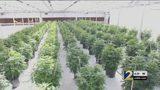 Gov. Kemp signs medical marijuana bill; sales now legal for patients in Georgia