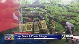 Firefighters rescue man trapped inside delivery truck after massive tree fell