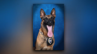Gwinnett police dog dies after chasing suspect in 90-degree heat