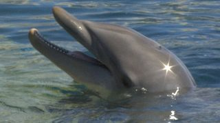 Swim with dolphins, sip from Fountain of Youth on trip to Florida