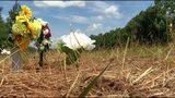Paulding County third grader ID'd as boy killed in Alabama crash