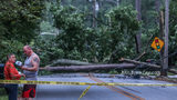 Trees down on Briarcliff Road Thursday morning