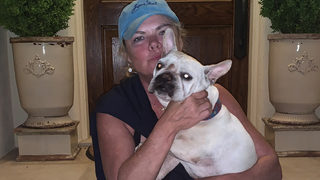 Woman gets French Bulldog back days after theft