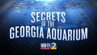 Secrets of the Georgia Aquarium