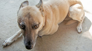 Dogs scared by fireworks = busiest day of the year for local animal shelters