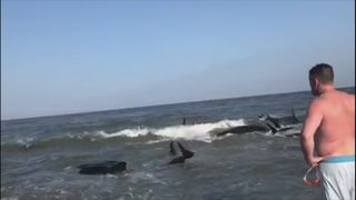 Video shows dozens of whales beached on Georgia coast