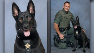 Police dog killed during mix-up while pursuing suspect
