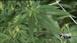 This metro county will not prosecute any more marijuana cases -- for now