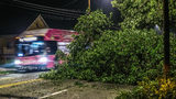 Tree down on busy Atlanta road during morning commute