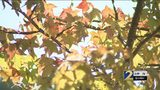 Record heat, drought could have impact on fall leaf-watching season