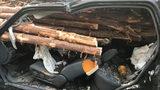 SUV crash into log truck in Georgia