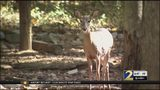 Eyes on the roads! You may be more likely to hit a deer during this time of year